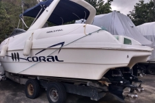 Coral 31C